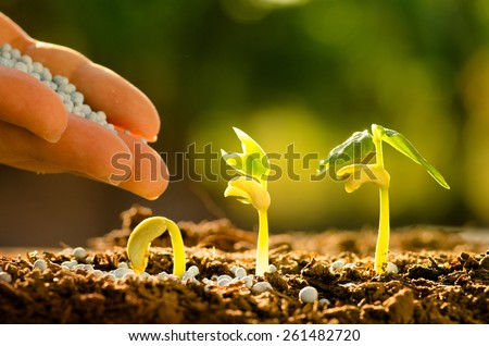 Fertilizer,Agriculture, Seeding, Plant seed growing concept, Farmer hand giving fertilizer to young plant - stock photo