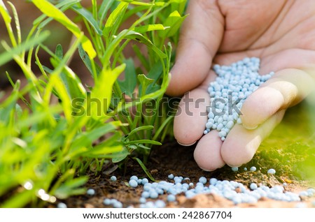 fertilizer,soil,Farmer hand giving chemical fertilizer to young plant