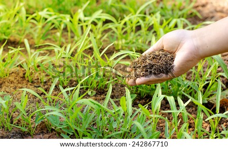 fertilizer,soil,Farmer hand giving compost fertilizer to young plant - stock photo