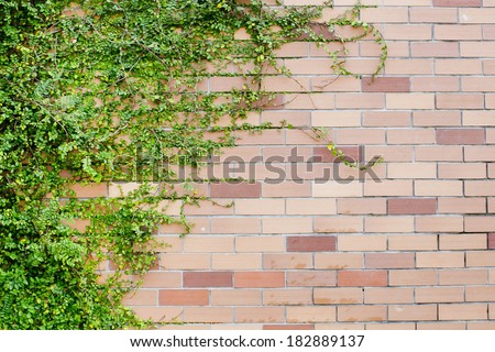 Fesh spring green leaves plant over brick wall background
