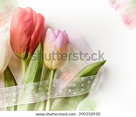 Festive composition with beautiful colorful tulip for creating holiday cards, invitations, flyers, posters or other design. Close up. - stock photo