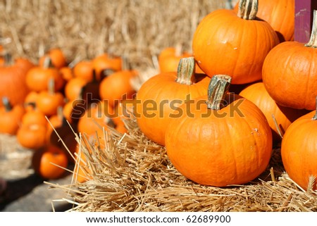 Festive holiday pumpkins for Halloween on hay