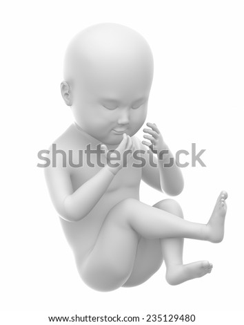 Fetus baby isolated white concept
