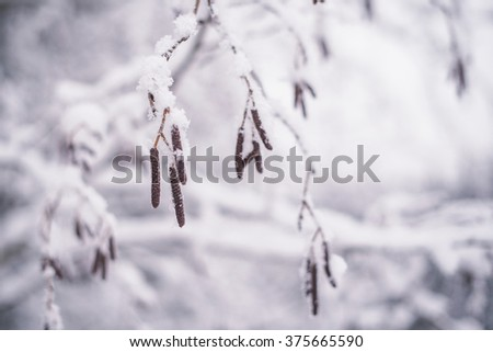 Few snow branches in a winter forest  - stock photo