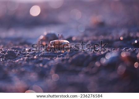 Fiddler crab on the beach  - stock photo