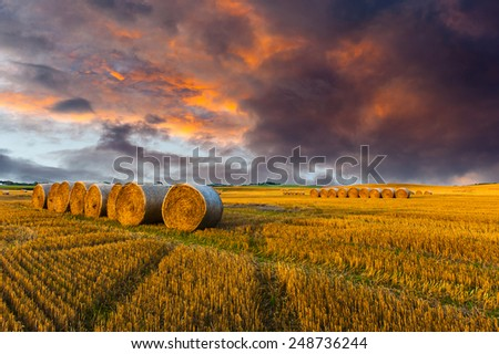 Field after harvest and dramatic sky during sunset - stock photo