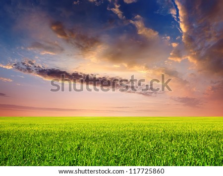 Field and and bright sky during sunset.