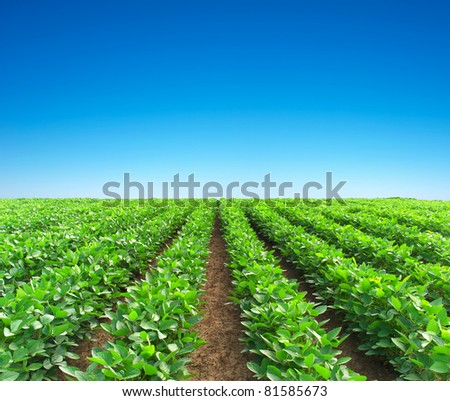 Field and green lines. Composition of the nature - stock photo