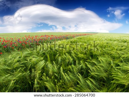 Field and sky in summer time. Agricultural landscape
