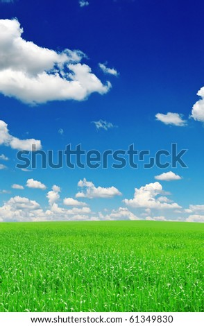 field and the blue sky