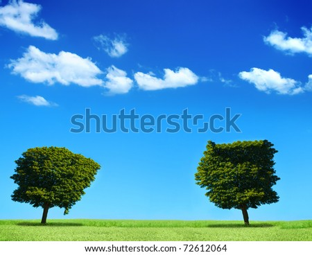 field and two trees, cumulus clouds in background