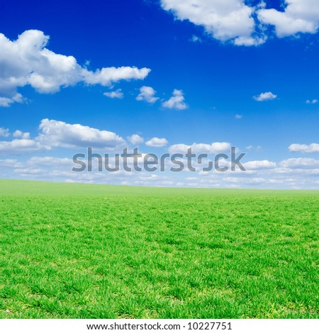 field and white fluffy clouds
