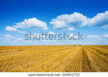 field at after harvest agricultural concept  - stock photo