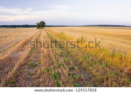 field at sunset landscape. - stock photo