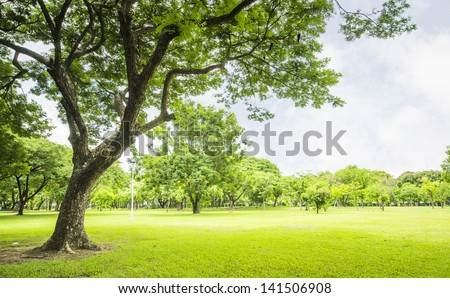 field, big tree, sun and blue sky - stock photo