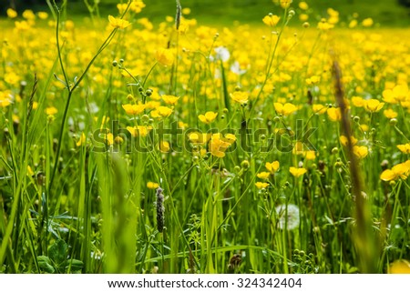 Field covered with wild flowers