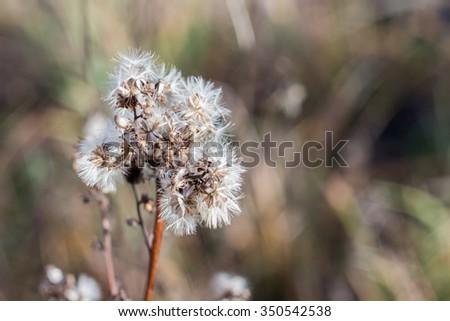 Field flowers in winter in the eastern europe. - stock photo