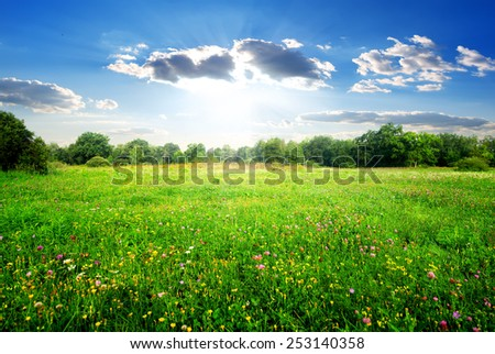 Field flowers on a beautiful spring meadow - stock photo