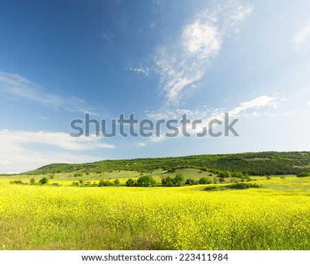 Field from yellow colours. Nature composition.