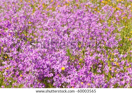 Field full of violet flowers background, pure green with violet - stock photo