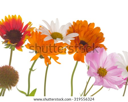 Field gentle beautiful Gaillardia flowers, white daisy, bright calendula, echinacea and pink kosmeya isolated on a white background - stock photo