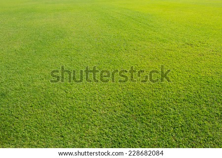 Field grass in sunlight. - stock photo