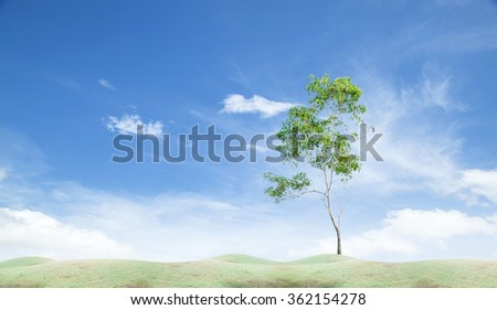 Field grass in the morning,and green tree with blue sky - stock photo