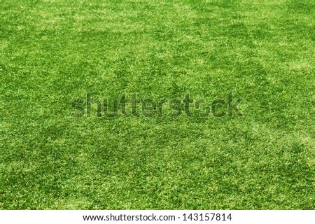 Field green grass background. Selective focus. - stock photo