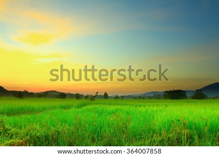Field greens, almost a blur , soft , bright , golden sun shining behind a cloudy sky, a quaint to look attractive . - stock photo