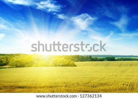 Field illuminated by the sun - stock photo