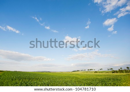 Field in Europe, photographed in warm light of afternoon. Beautiful landscape photograph of lush ecological farmlands in Poland. - stock photo