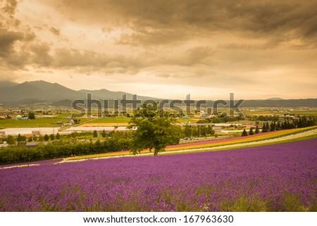 Field in Hokkaido Japan - stock photo
