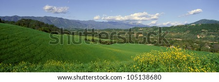 Field in Springtime, Ojai, California - stock photo