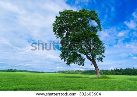 Field Landscape Scenic View  - stock photo