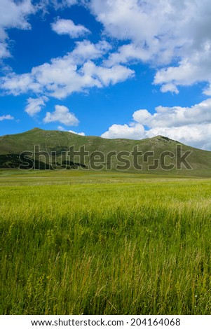 Field landscape with fluffy clouds - stock photo