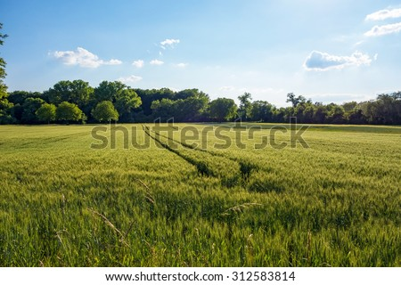 Field, meadow and forest / trees in the background - blue sky, sunset / sunrise - stock photo