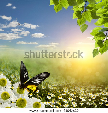 Field meadow daisies in the sun - stock photo