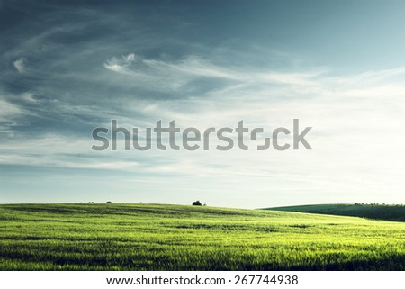 field of barley in sunset time - stock photo