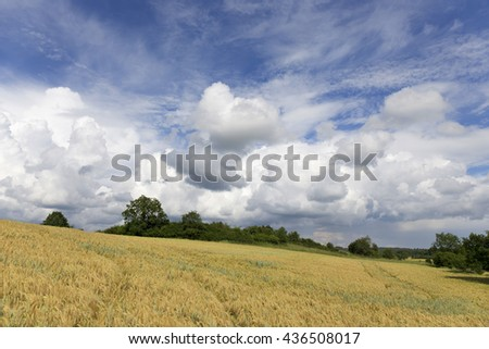 Field of Barley in the storm summer country Landscape