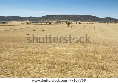 Field of barley stubble in an arable landscape in Ciudad Real province, Spain