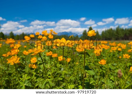 Field of blooming flowers with the mountains at the background - stock photo