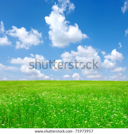 field of camomiles - stock photo