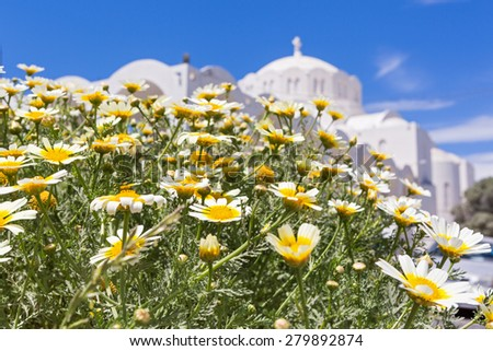 Field of chamomile and white building of the Church, Greece, Santorini - stock photo