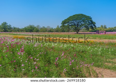 field of colourful flowers with big tree - stock photo