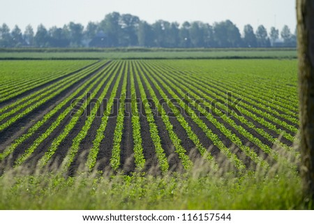 Field of crops - stock photo