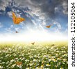 field of daisies with butterflies - stock photo