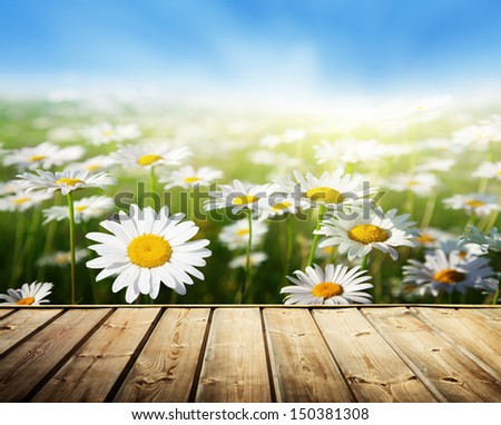 field of daisy flowers and wood floor - stock photo