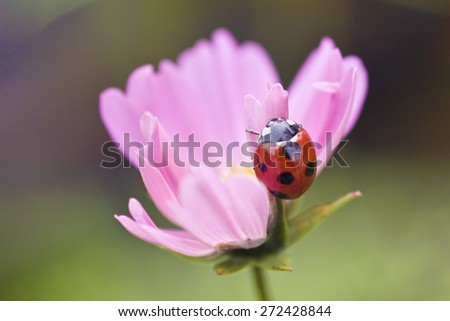 field of daisy flowers for adv or others purpose use - stock photo