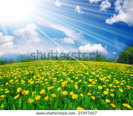 Field of dandelions on background of the sky - stock photo