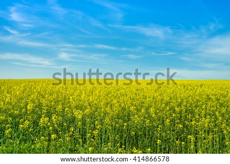 Field of flowering rapeseed against the blue sky and clouds. Alternative energy. Biofuels - stock photo